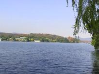 西湖水中垂柳