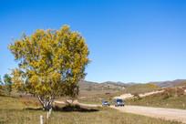 白桦树旁的山路
