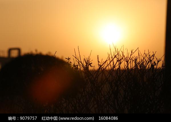 晨光中的小树枝图片