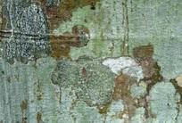 斑驳的菠萝蜜树皮纹理背景图案