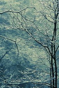 白雪下美丽的树枝