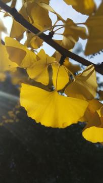 秋季黄色唯美风景图