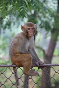 可爱的小猴子