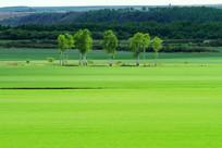绿色农田树林风景