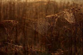 森林里面蜘蛛网