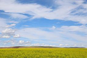 蓝天白云草原油菜花美景