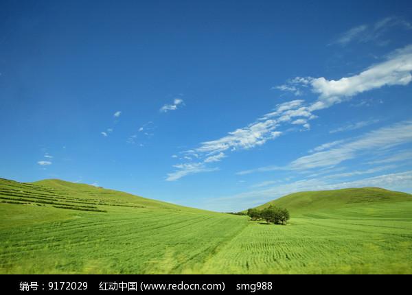 蓝天白云下草原树林美景图片