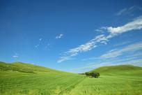 蓝天白云下草原树林美景