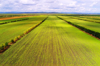 农田风景 (航拍)