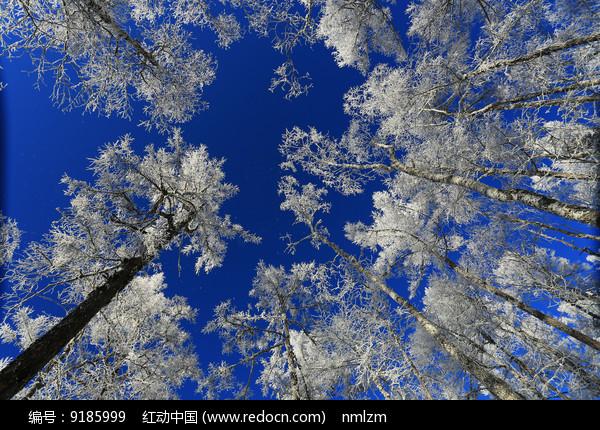 林海雪原雾凇梨花开图片