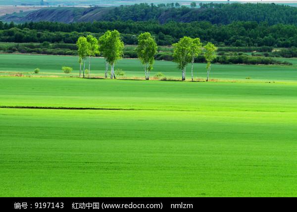 绿色农田风景图片