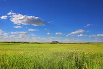 翠绿的达里湖草原风光