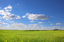 蓝天白云深草达里湖草原