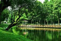 公园里的树林小湖摄影