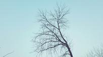 冬景树木风景图片