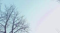 冬天树木特写