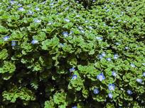 路边的野花绿色植物绿色素材
