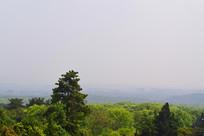 俯瞰树林景观
