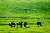 牧场羊群和马群