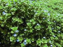 路边的野花绿色植物绿色兰花