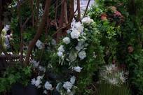 白色山茶花丛