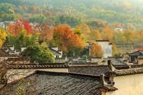 红叶满山村