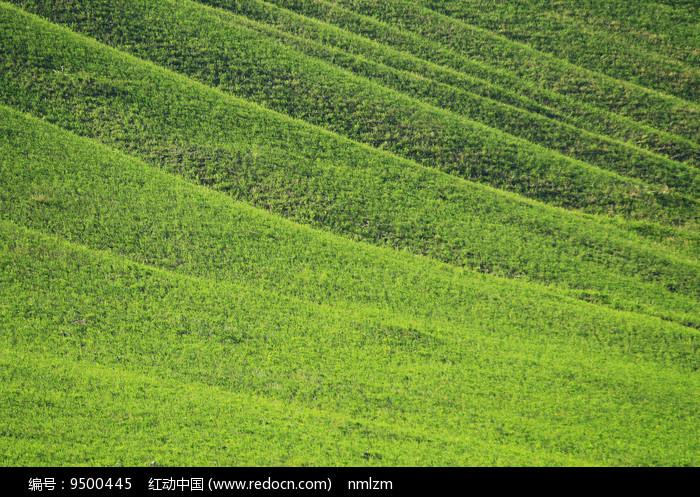 山坡绿色牧场植被丰茂图片