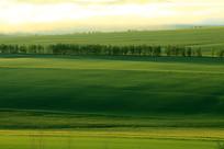 绿色原野晨雾缥缈