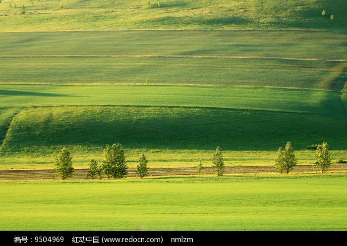 美丽的绿色田野图片