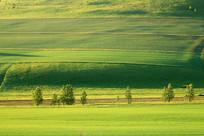 美丽的绿色田野