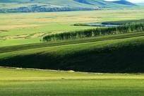 起伏的绿色原野