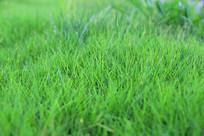 绿绿草坪地