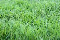 微距绿草地