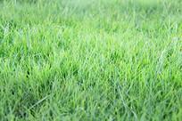 自然绿草地