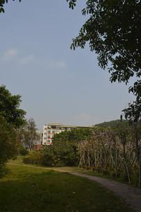 陈田花园绿色风景