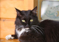 观复猫黑猫