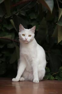 观复猫猫坐姿