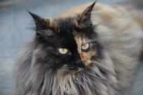 猫咪的眼神