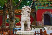 沈阳清福陵正红门母石狮正面