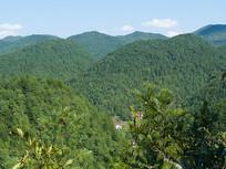 森林覆盖的大山