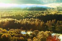 秋季森林河云雾风景