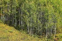 树林秋色风景