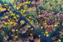 彩色树林(航拍)