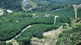 树林里的蜿蜒道路