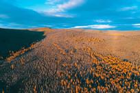 大兴安岭金色的山林