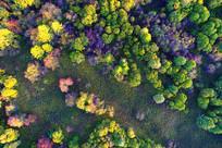 航拍秋季五彩林