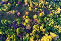 航拍五彩林