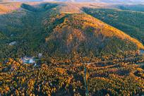 金色的山林