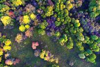 秋季彩林航拍