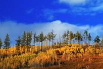 山脊树林秋色
